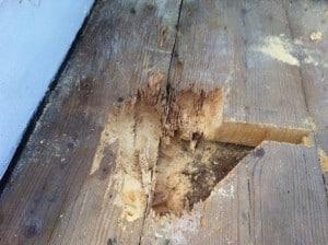 Orima virke – när röta och insekter gjort sitt.