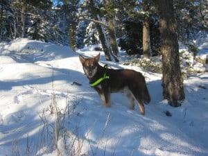 Pumah i snön 2007