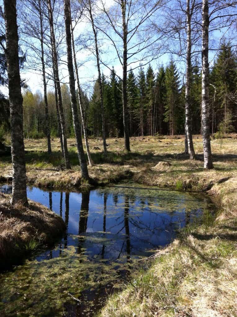 Visst vore det trevligt med några änder som plaskade omkring i dammen.