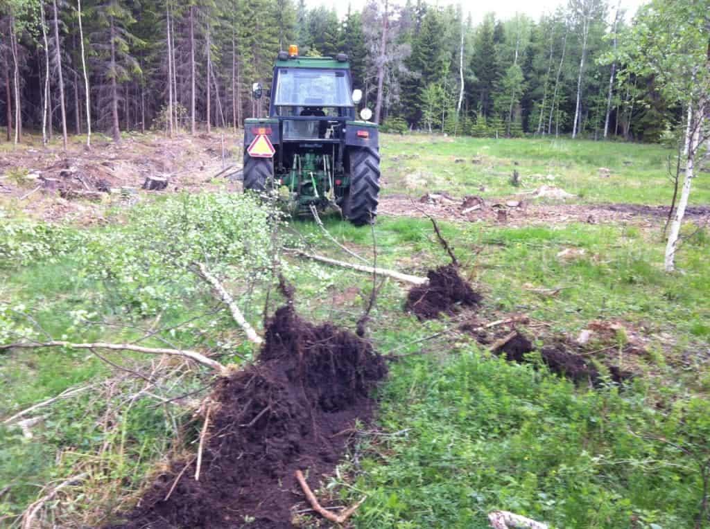 Drog upp tre träd på tio minuter. Småbjörkar mellan fem och tio cm i diameter.