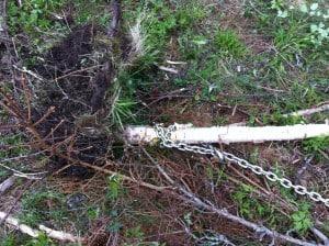 Dubbla varv runt trädet så glider inte kättingen så mycket.