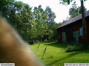 Något stort med brun päls passerar kameran på förmiddagen.