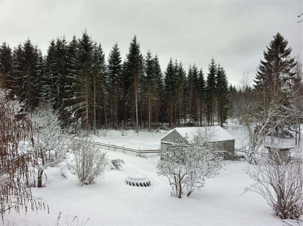 När jag flyttade till gården stod granskogen tät nästan helt intill huset. När jag tog beslutet att göra en nyodling verkade resultatet långt borta – men det gick.
