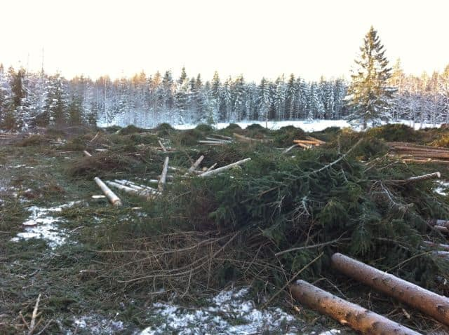 Här är skogen avverkad. Två år senare är marken gröngödslad, kalkad och åter redo att bära frukt.