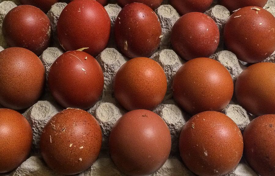 De här äggen kom direkt från hönsgården – och rätt förvarade håller de längre än mänga kan föreställa sig. Ägg har en extrem hållbarhet.
