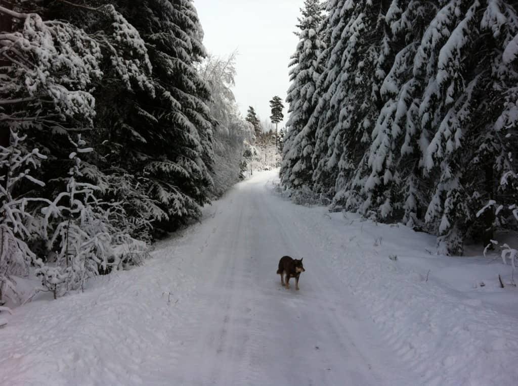 Vinter133