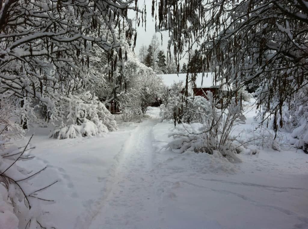 Jag ser till att hålla en liten stig ned till ladugården öppen. Får skaka träden lite också annars levererar de nedtyngda grenarna alldeles för mycket snö i nacken.