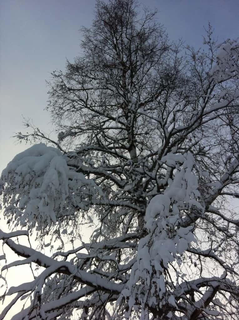 Vinter135