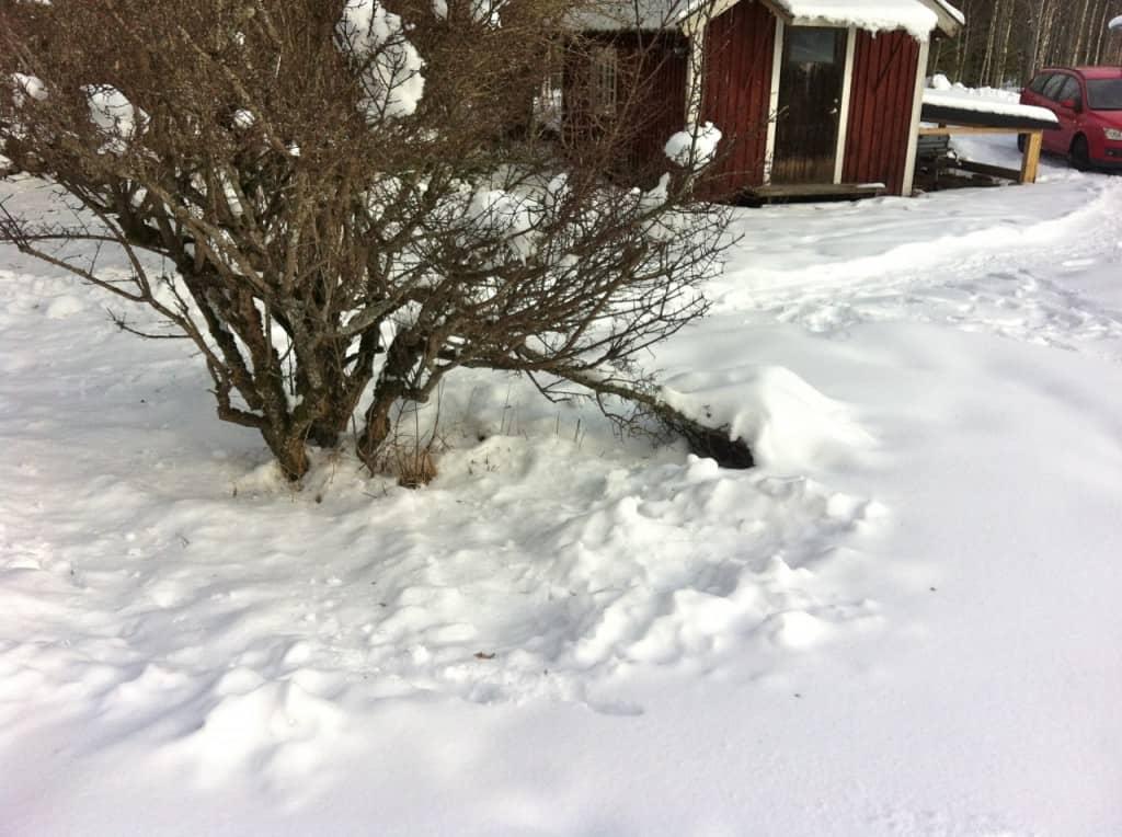 Snöträd3