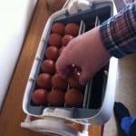 Fin mörk färg på äggen. Men så ska maranägg se ut.