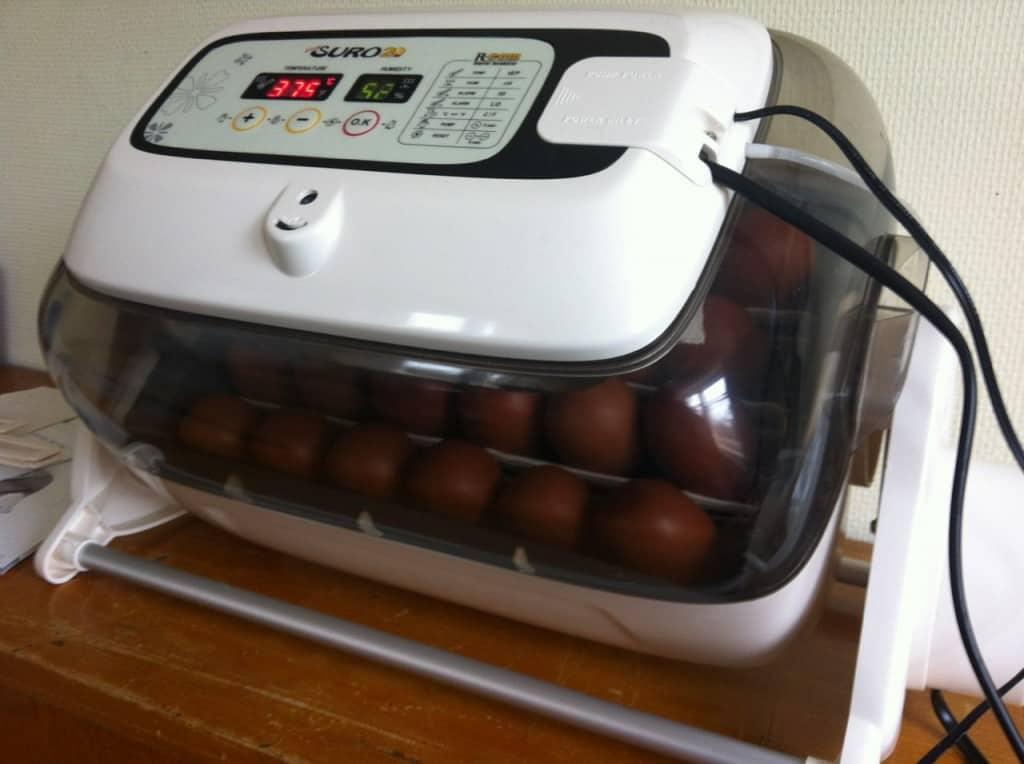 Nu ligger det 24 maranägg i kläckaren. Om en vecka ska jag lysa dem för att se hur många som utvecklas och om tre veckor så finns det förhoppningsvis nya kycklingar på gården.