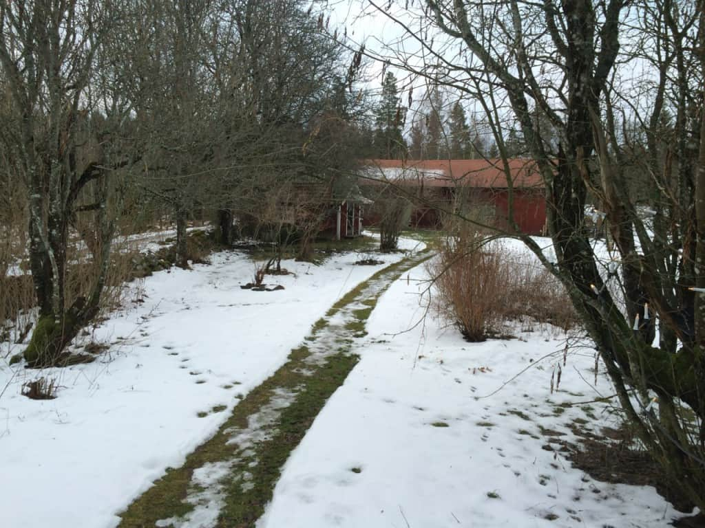 Snön försvinner snabbt. Min handskottade gång mellan hus och ladugård.