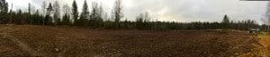 Skogen borta och efter kalkning och gröngödsling kommer marken förhoppningsvis att täckas av örter,