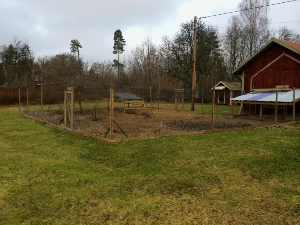 Hönsgården fungerar bra och inga rovdjur har ännu lyckats ta sig in. Återstår att dela in den i sektioner så att hönsen inte krafsar sönder all växtlighet på en gång.
