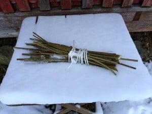 En bunt med sticklingar från pil väntar på våren. För att de inte ska torka ut har jag grävt ner dem i snön.