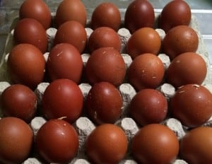 Jag har ännu en bra bit kvar för att få äggen perfekta. Men det är inget tvivel om att detta är riktiga maranägg.