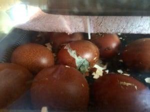 Först syns bara ett litet hål på ägget. Sen fortsätter kycklingen att vidga hålet så den kan ta sig ut.