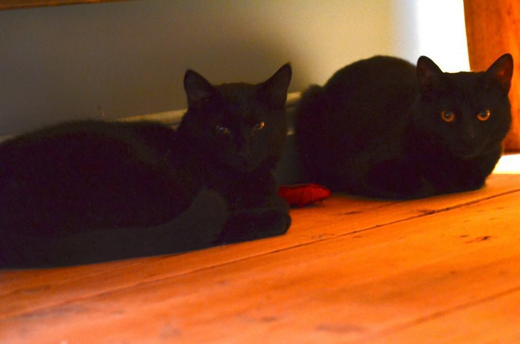 Marlon och von Dallas vilar under min säng. Än så länge ser jag inte skillnad på dem, men lyckligtvis har Marlon en vit fläck på bröstet.