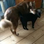 Pumah och Dallas är numera kompisar.