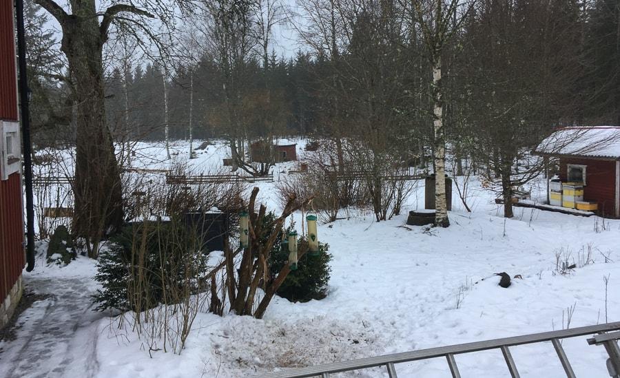 Kommer våren i år? För ett år sedan fotade jag snödroppar – i år lovar prognosen -14 i helgen.