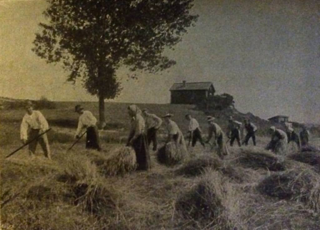 """En bild av skördearbete i början av 1900-talet. Ur Pehr Bolins """"Jordbruksbok för pojkar""""."""