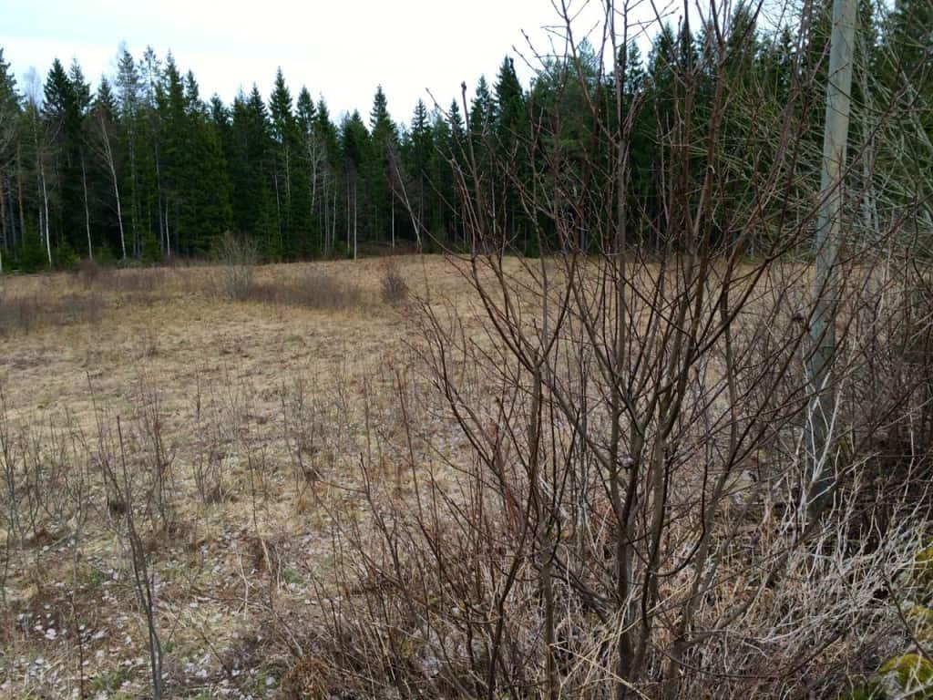 Närmaste skiftet är runt 0,7 hektar. Måttligt slybevuxet och med en surhåla i mitten