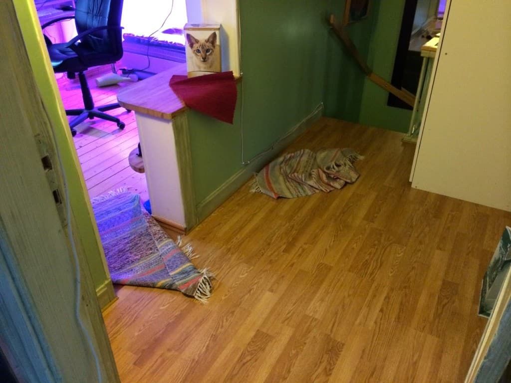 Det är inte svårt att se när Dallas passerat på sin fartsträckasom går mellan sovrum, arbetsrum, trappan och soffan i vardagsrummet. Tur att han är katt – själv hade jag brutit benen om jag försökt samma sak.
