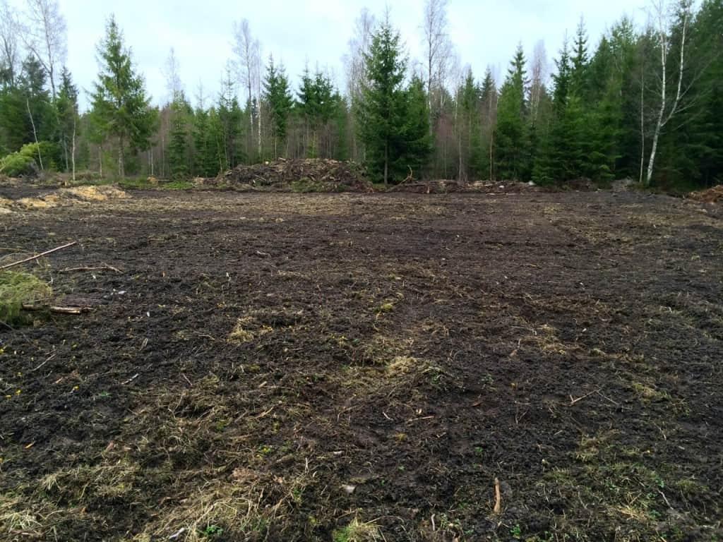 Här ska rabarberns växa. Bästa jorden på gården, men samtidigt ligger den på i skymningslandet – med granskog i söder är det en av de skuggigaste platserna på fältet.
