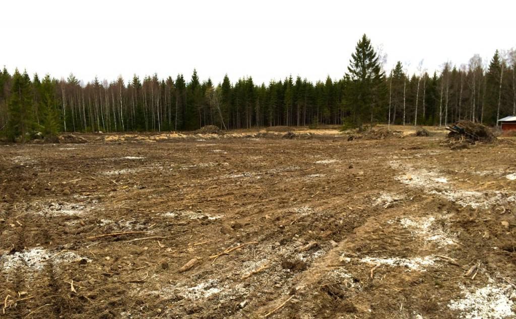 Fältet är harvat i ena riktningen. Har dragit ihop någon kubik med rotrester, resten har lagt sig i harvriktningen.