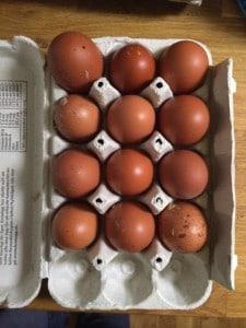En bra dags äggproduktion