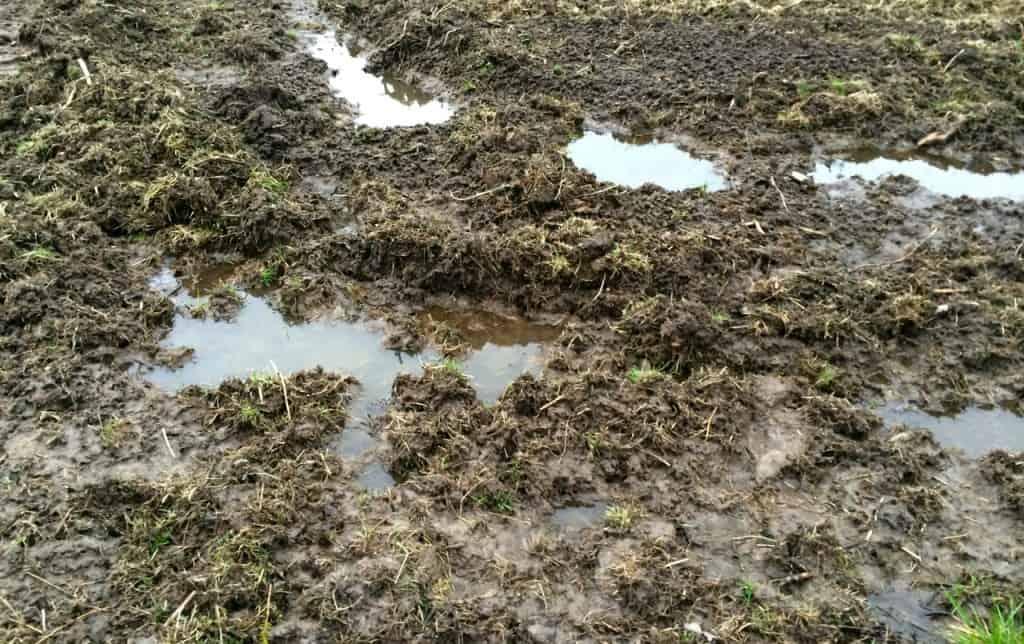 Två dagars regnande har förvandlat delar av min mark till träsk. Att ge sig ut med traktorn i det här är inte att tänka på.