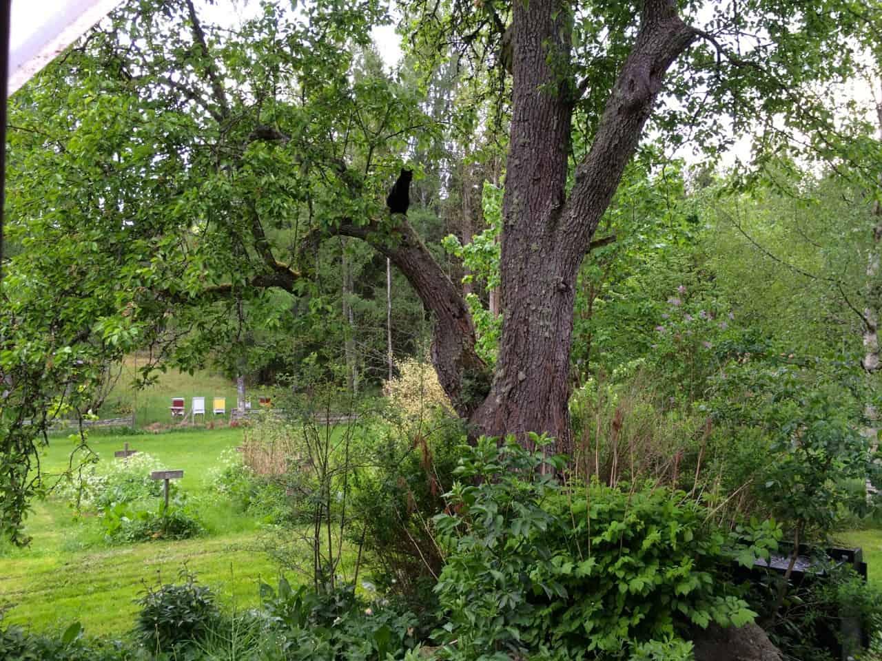 Ett bra ställe att hålla koll på omgivningarna. Marlon gillar träd.