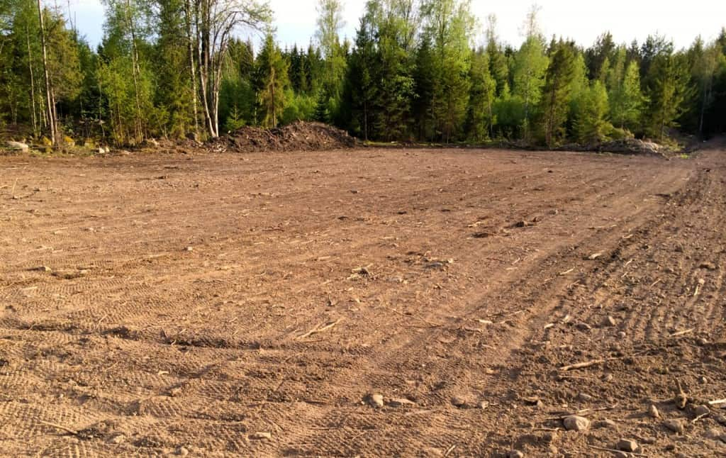 Hela marken är nu sådd med gröngödsling. Här ser man rätt tydligt skillnaden mellan den vältade delen och den del som bara är harvad.