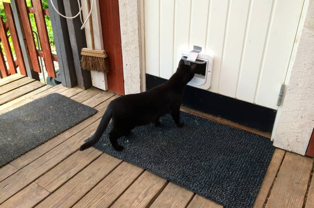 När man monterat en kattlucka kan man tejpa upp den de första dagarna. Så vänjer sig katterna snabbt vid att använda den vägen. Marlon nosade lite på nymodigheten – sen var det som om den alltid suttit där.