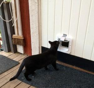 Att man kan ta sig igenom en upptejpad kattlucka fattade båda katterna genast. Men att den går att öppna tog det en månad för Dallas att förstå.