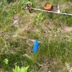 De flesta plantorna ligger lite mitt emellan, de lever och har vuxit någon decimeter.