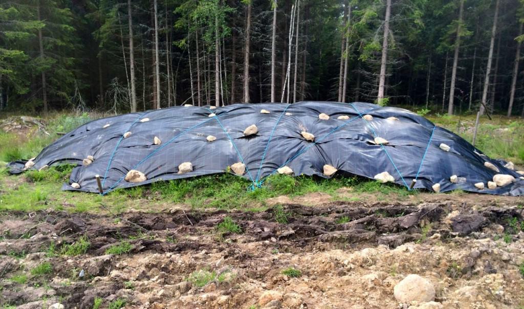 Öppnas om två år. Nu ska ogräset och rötterna få gosa till sig under plasten ett par år. en ska jorden ut på fältet igen.