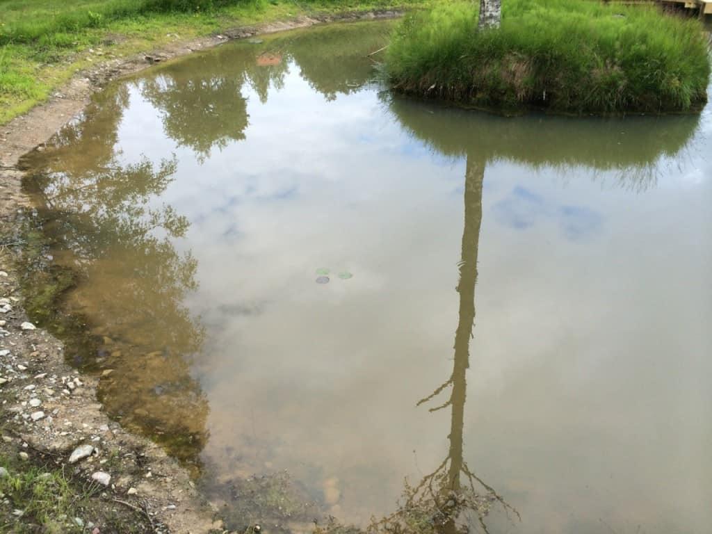 Här skedde den senaste iakttagelsen av den sannolika fisken.