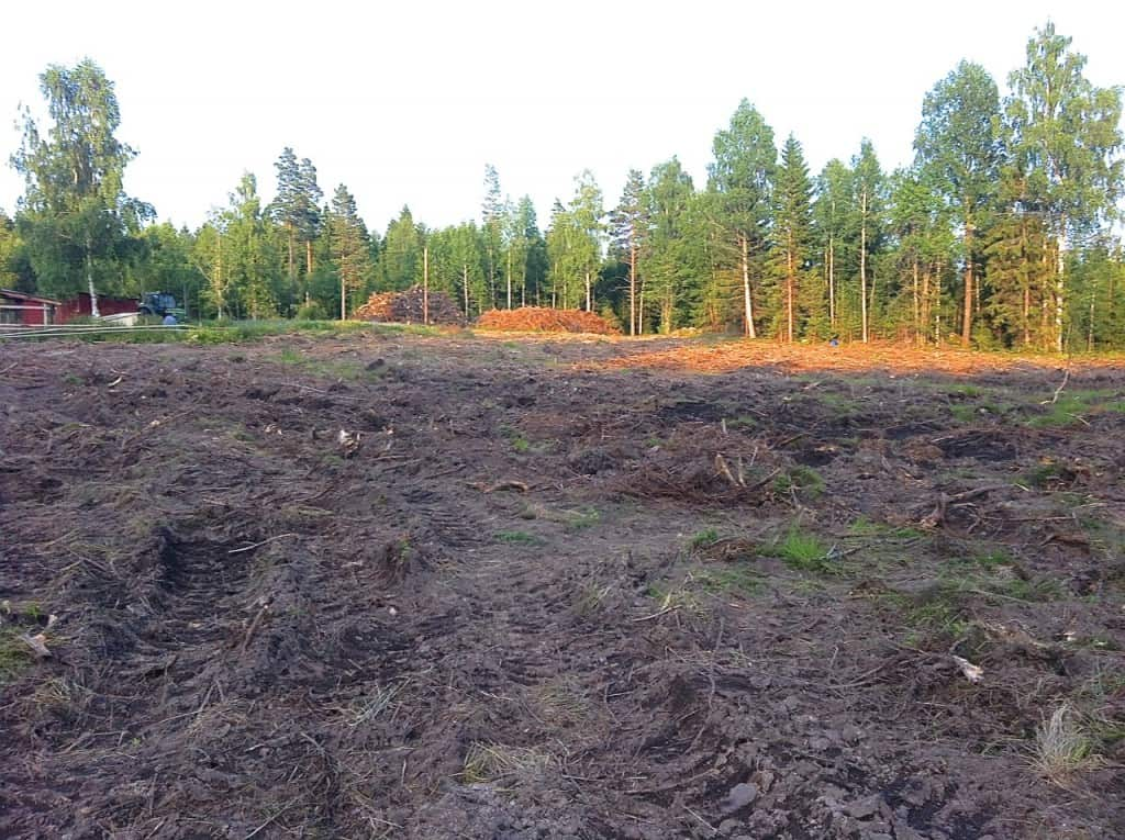 Närmast högarna av GROT och stubbar planerar jag att anlägga äppelodlingen. Jag har tre år på mig att få marken så bra som möjligt. Den här platsen ligger i en svag läad sydsluttning. Gröngödslingen kommer att få ligga en säsong till och nästa år blir det potatis på marken planerar jag.