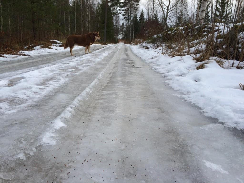 Även vägen är belagd av ett kompakt istäcke förnärvarande. Ska man köra här är det bra med dubbdäck. Och på romenaderna är det säkrast att gå i skogen.