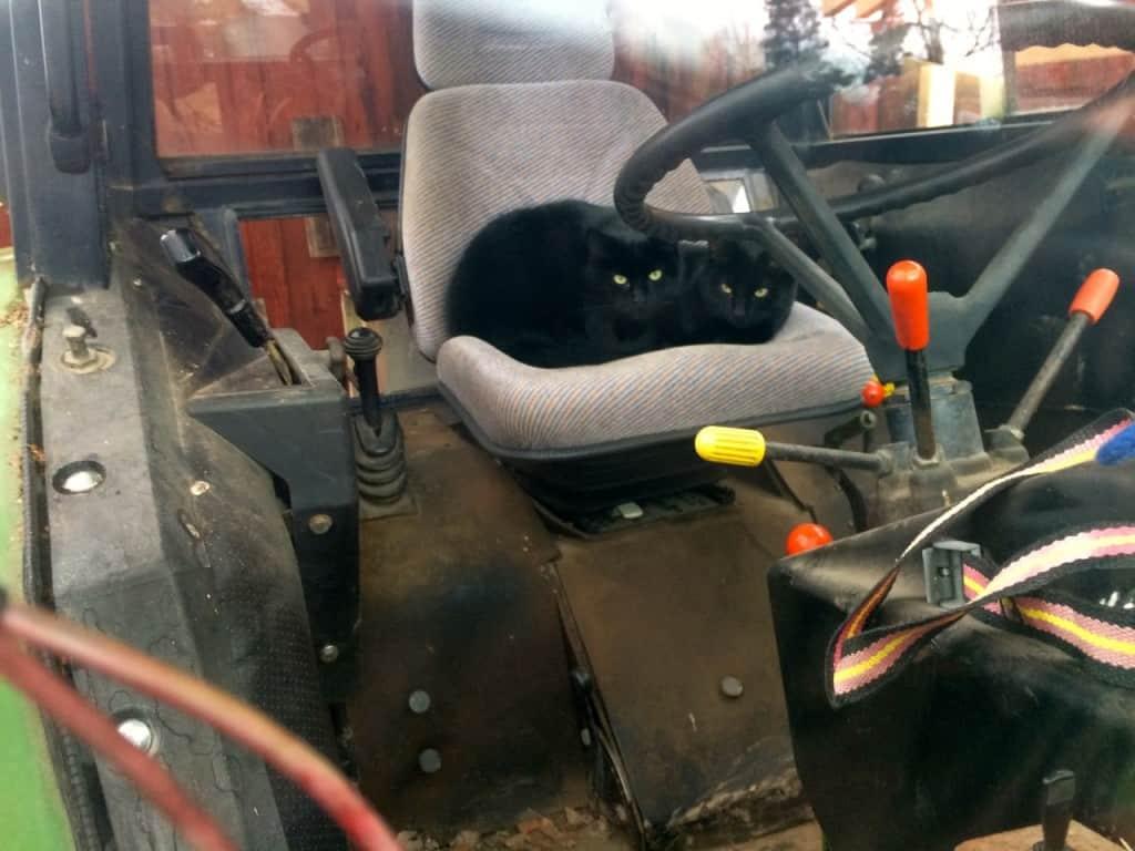 En JD 3130 med dubbelkatt. De verkar ha det bra och jag tror inte jag behöver oroa mig för eventuella musbon i traktorn det här året.