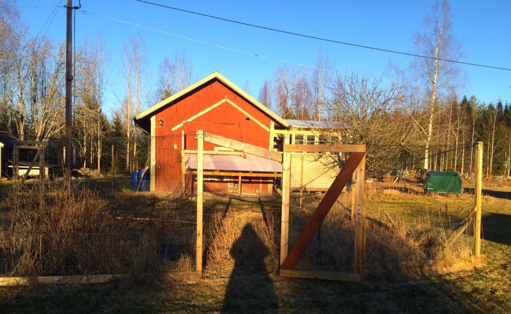 Snötyngden har pressat ner nättaket i hönsgården och fått en av stolparna att börja luta. Kommer att sätta dit en rejäl sträva och sen stängsla av inåt med rådjursnät.