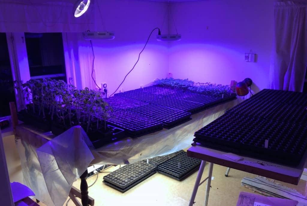 Nu går Green Room på fullvarv. 2000 plantor i olika stadier av utveckling väntar på att jorden ska komma upp i temperatur.