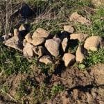 En liten del av all sten vi plockat under dagen. Varje vända drar upp nya och de större klunkarna har vi fått dra med traktorn..