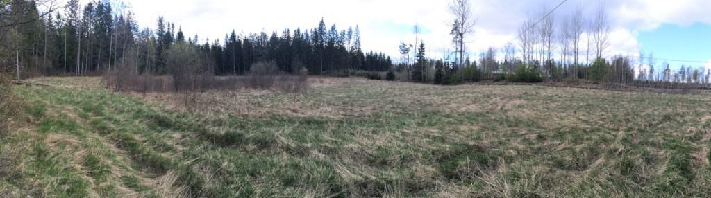 Panoramavy över utmark 2 (Med tiden får jag hitta mer poetiska namn för fälten). Totalt är detta fält ungefär en hektar men det ligger en rejält försumpad sänka i mitten, man kan se växterna där, så i år kommer jag bara att ägna mig åt fältets övre del.
