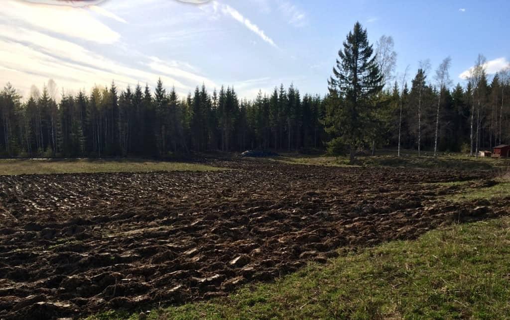 Vårplöjningen avklarad. Det gröna lätet till vänster i bild ligger ovanför rabarberodlingen och ligger i beredskap om odlingen ska utökas nästa år.