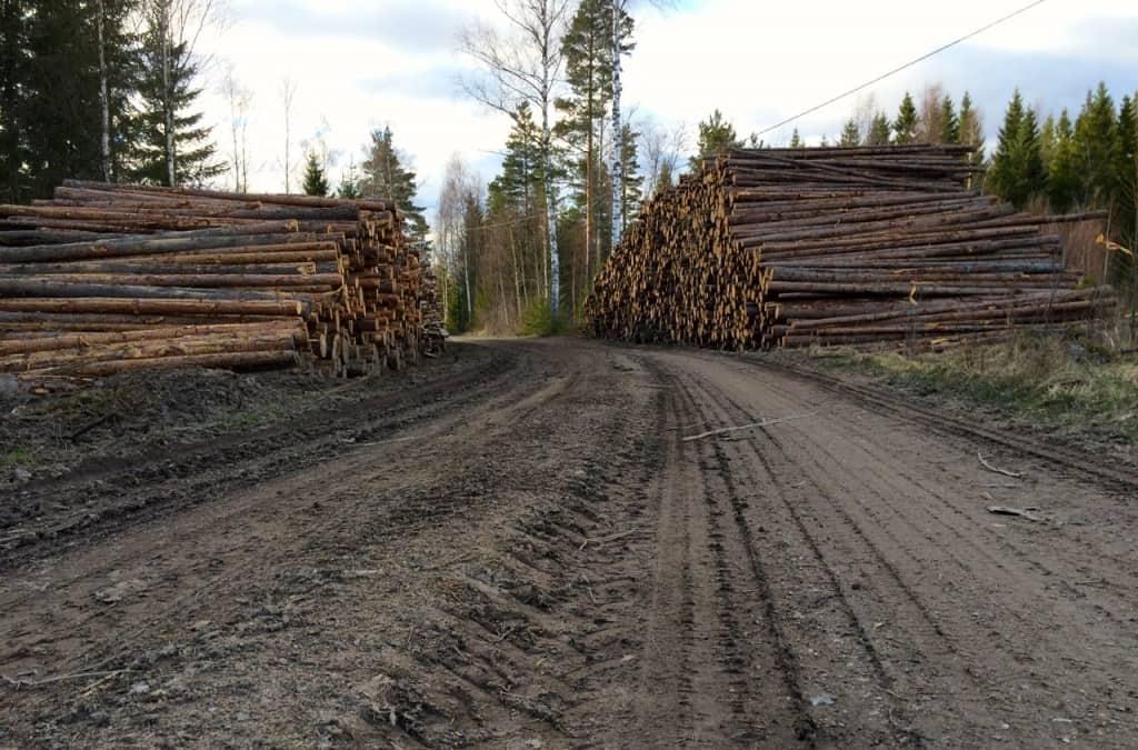 Skogsmaskiner och timmerbilar har satt sina spår på vägen efter vinterns avverkningar. Och våren är rätt tid för att reparera en grusväg.En fördel är i alla fall att de stora maskinerna har gjort vägen bredare.