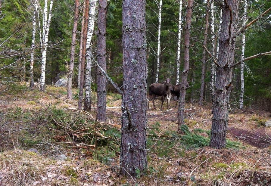 Man behöver någon som påpekar att det finns djur i skogen.