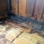 Först fäste jag 5 mm rostfritt musnät längs väggarna. Att helt mussäkra en gammal byggnad är svårt. Men de ska inte få det lätt.