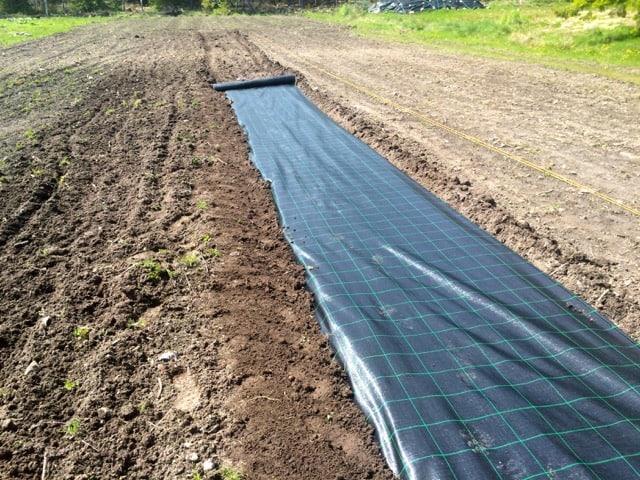 För att få väven sträckt gräver jag ner änden och sen rullar jag ut ungefär tio meter åt gången.